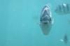 Snorkeling off Hideaway Island